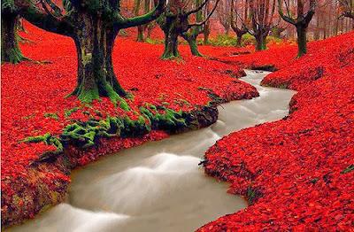 Bosque Rojo en Otoño (Madeira, Portugal)
