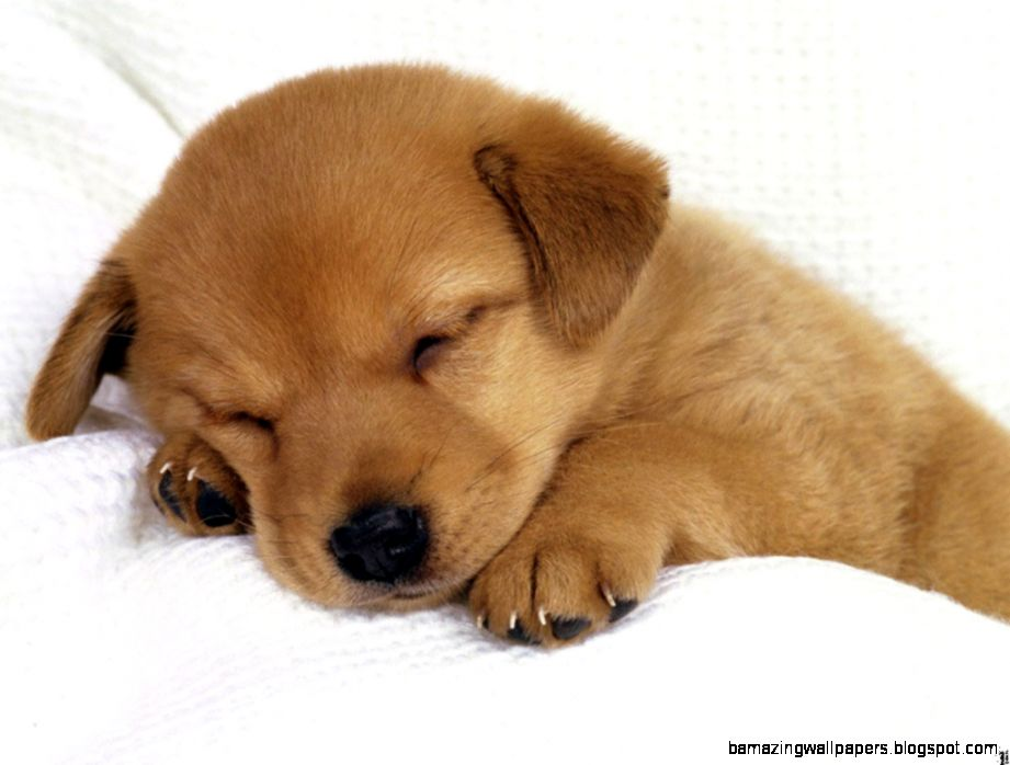 Cute Sleeping Puppies Search Results TechNewz Co   PowerballForLife