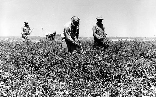 farming in the 1930s From 1910 to 1930, these states lost 19,000,000 acres of farmland,  until 1930  only 122% of all farm tractors in the united states were being.