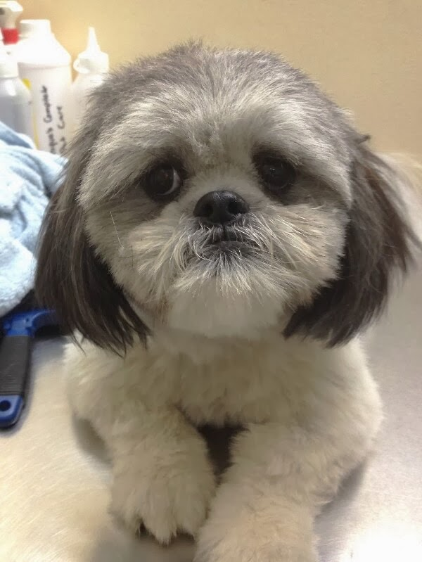 adorable dog pictures, sad puppy face