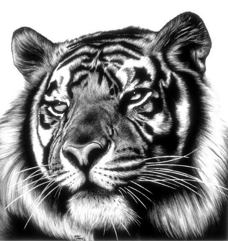 tigre-dibujo-hecho-a-lapiz