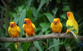 Harga Burung Yang Capai Rp 80 Juta