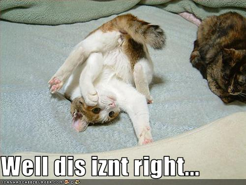 funny-pictures-cat-is-confused-by-rolling-around.jpg