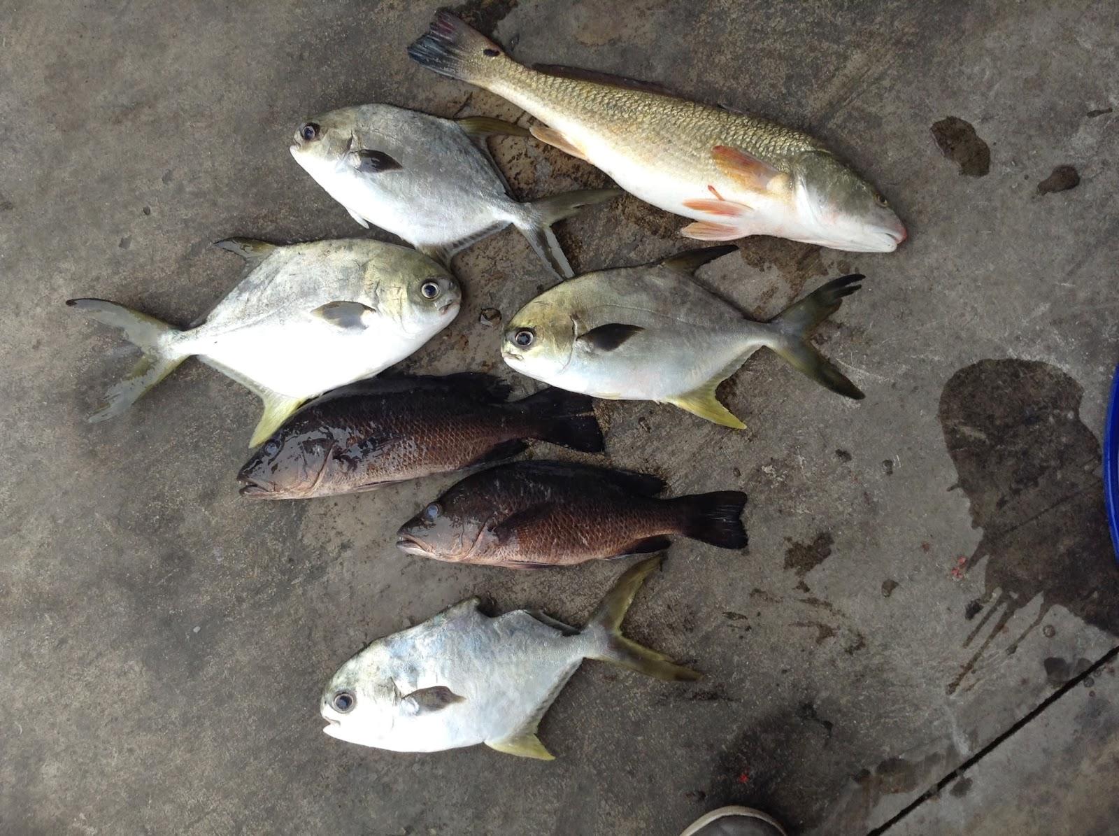Fishing In Sg Fishing At Punggol Pay Pond Tips