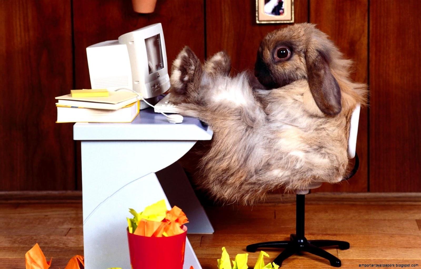 http://3.bp.blogspot.com/-hknVYfUdnqA/V2OAoiKnxwI/AAAAAAAAqN4/D4T0AG7U_lo9Xs2KV4YqcbGzDUPjKMTGACHM/s1600/funny-rabbit.jpg