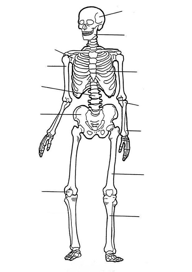 cuerpo humano  esqueleto para colorear