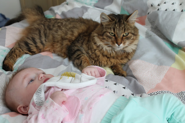 cat and baby lying on bed together