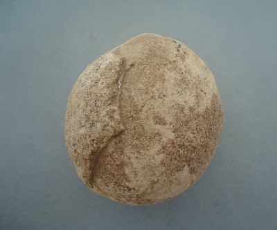 Authentic Prehistoric Fossilized Dinosaur Egg