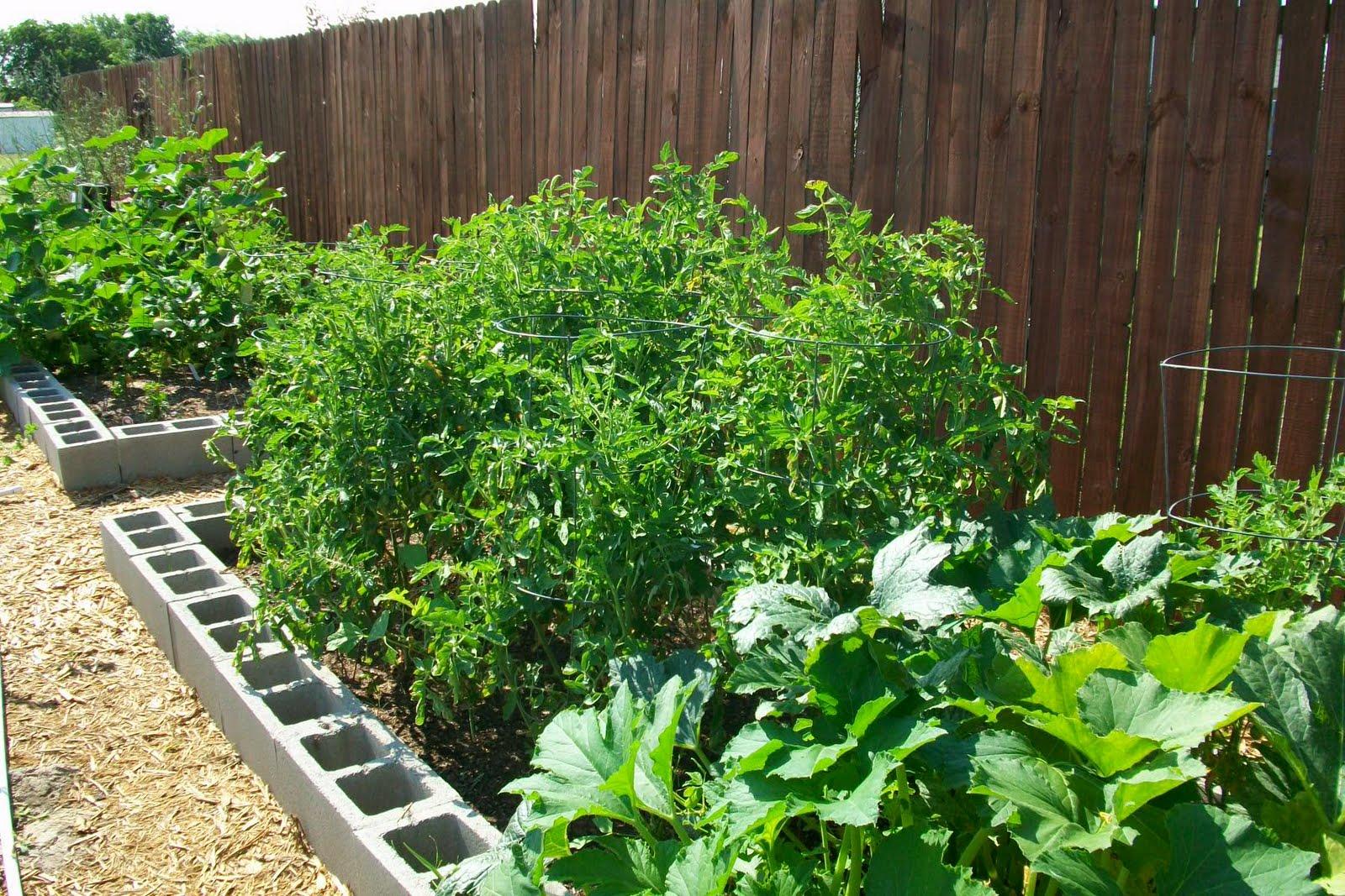 Gardening in texas for beginners