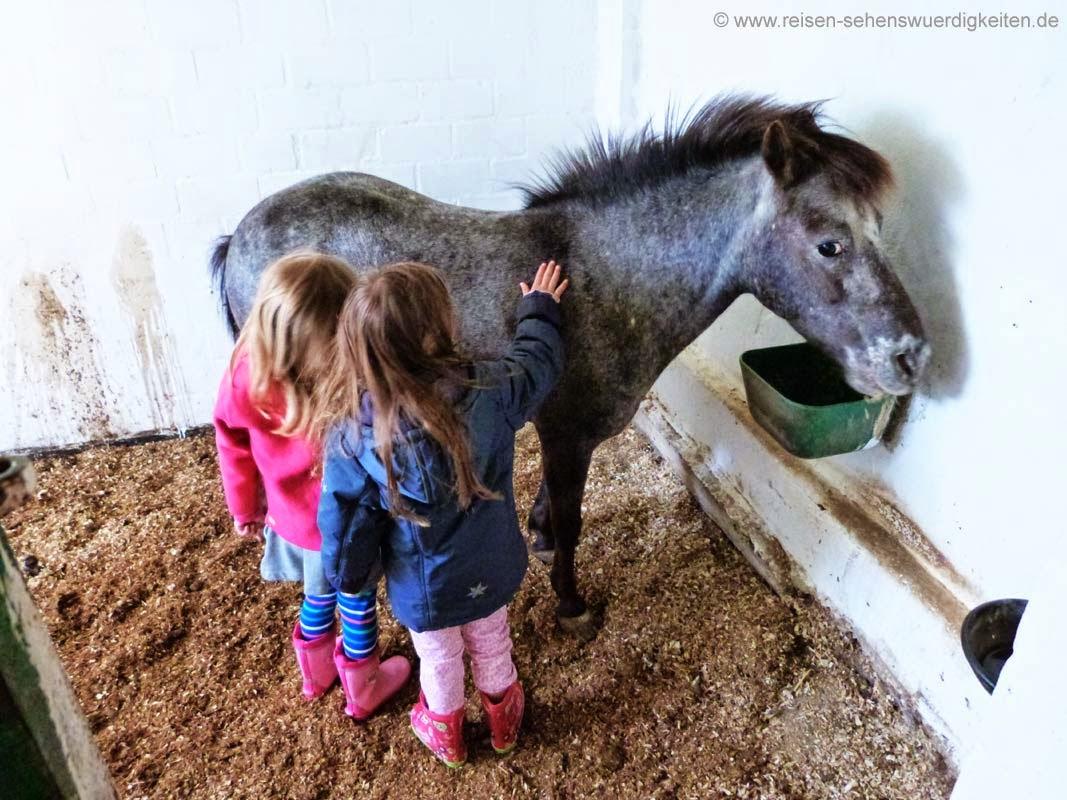 Kinder streicheln ein Pony