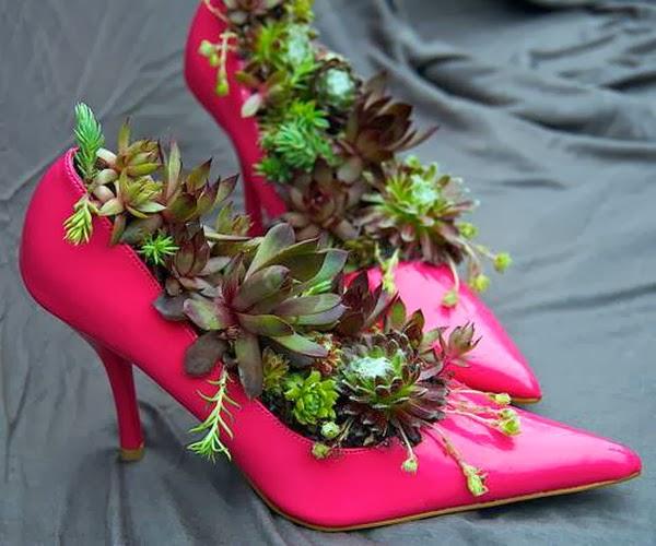 Succulents -Succulent gardens -succulent arrangements