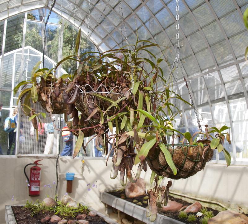 Viveros vangarden el destino de nuestras plantas carnivoras for Plantas para invernadero