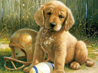 Puppies Cute Wallpapers
