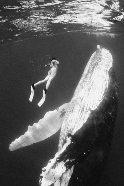 Woman swimming with blue whale