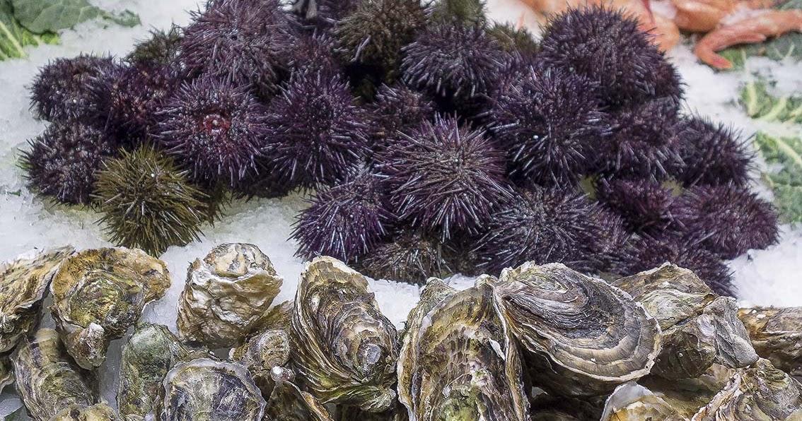 salmorrejo c mo limpiar y cocinar erizos de mar