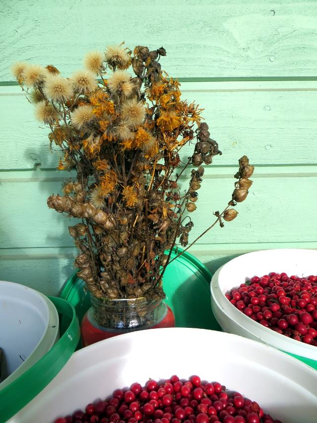 flower seeds lingonberries