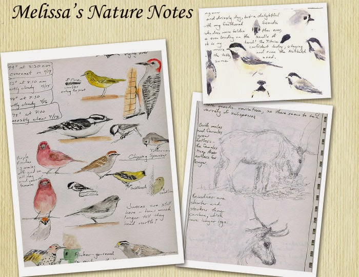 Melissa's Nature Notes
