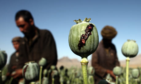 Opiophilia how heroin is made this review of a heroin manufacturing process uses images from afghanistan though opium poppies grow all over the world and the process of making heroin mightylinksfo Image collections