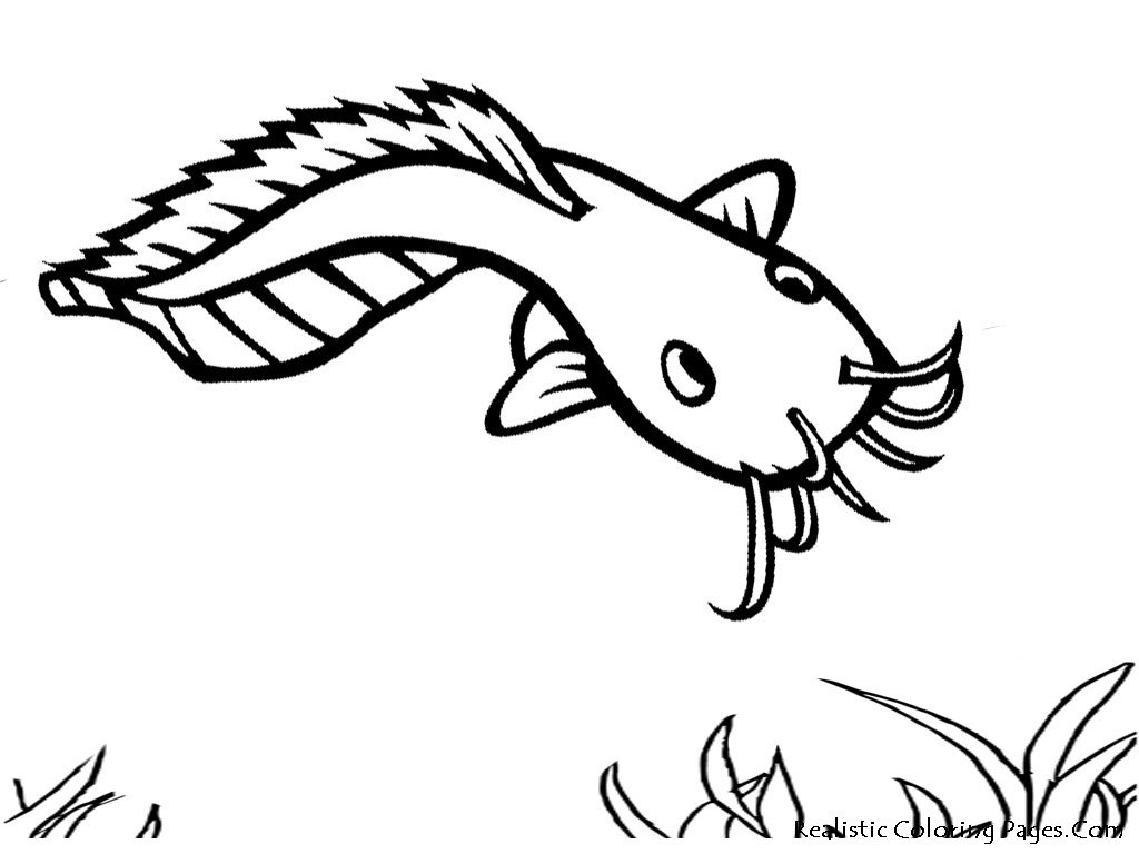 Fish coloring pages realistic cat