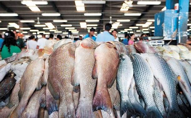 Начались первые торги на рыбной бирже Сахалина