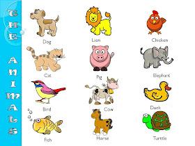 Teacher Paula The Animals