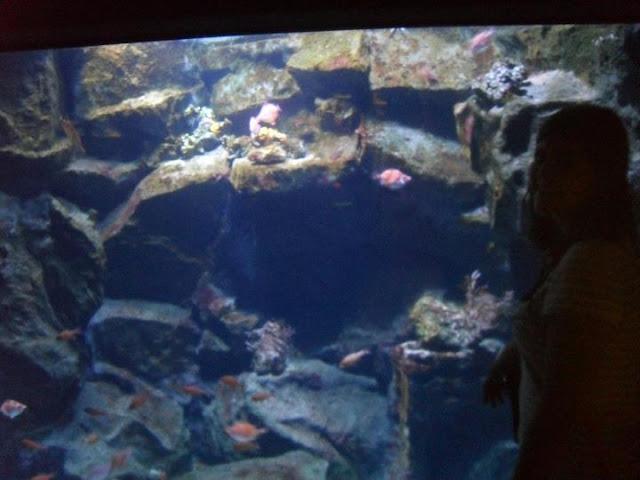 Sempione_parkı_akvaryum_aquarium