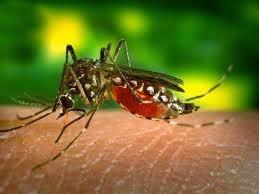 Penyembuhan Tradisional Demam Berdarah Dengue