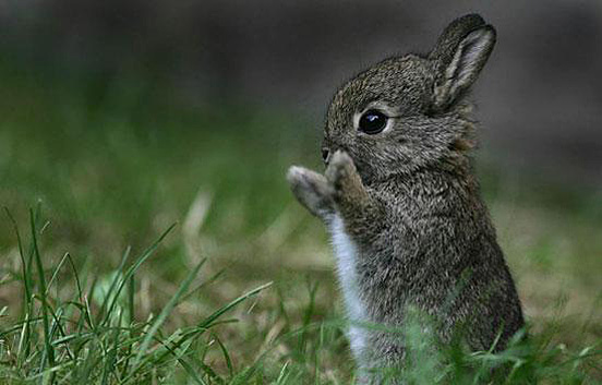Funny wallpapers|HD wallpapers: Really Cute Animals :)