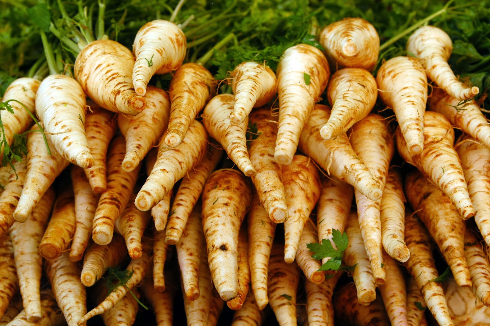 Parsnips are rich in Vitamin C and one of my favorite winter soup ingredients!