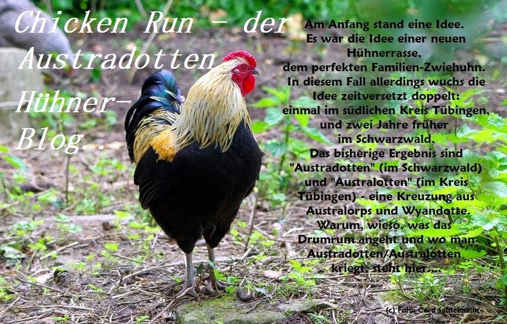 Chicken Run - der Austradotten-Australotten-Hühner-Blog