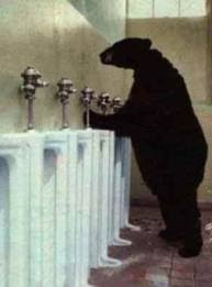 gambar lucu beruang