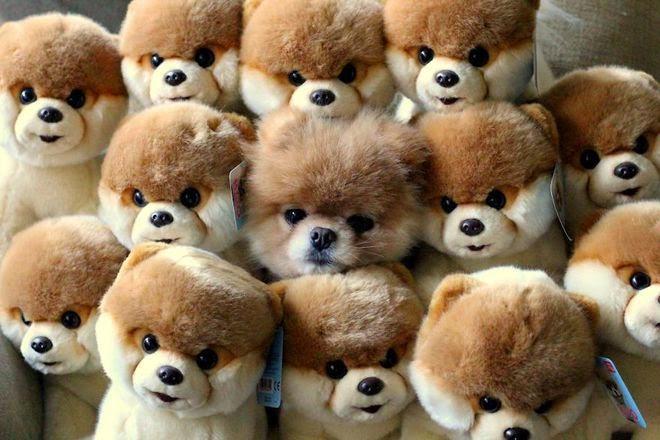 Anjing diantara boneka