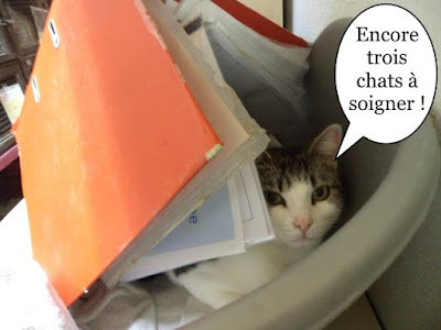 Une chatte dans un classeur.