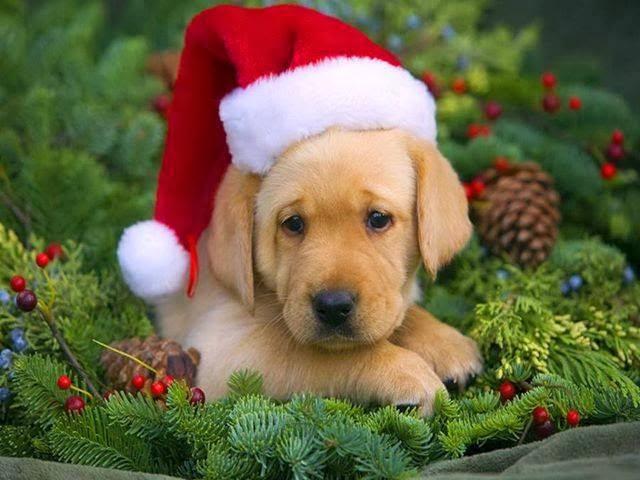 Weihnachtsbild Hund