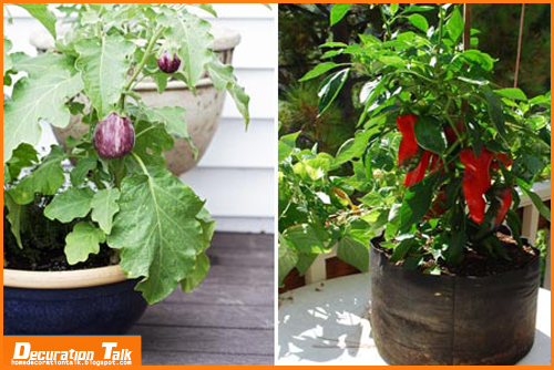 Best vegetables to grow on balcony my home design - Veggies that grow on balcony ...