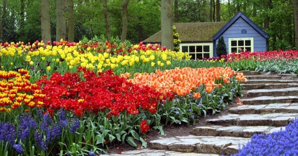 Amazing garden flowers wallpapers beautiful flowers wallpapers