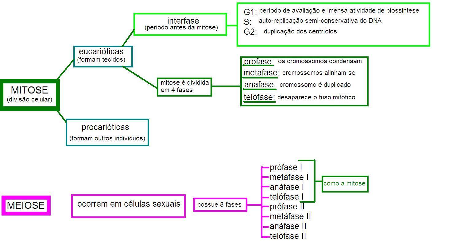 Mapa Mental Mitose E Meiose Example Best Theme