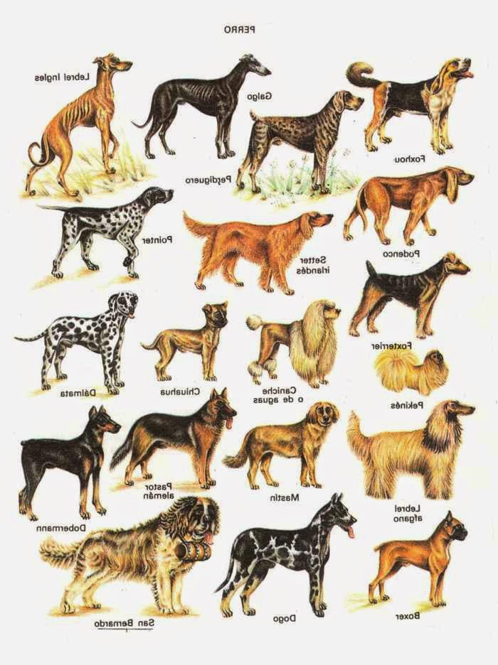 Identifying The Types Of Puppies