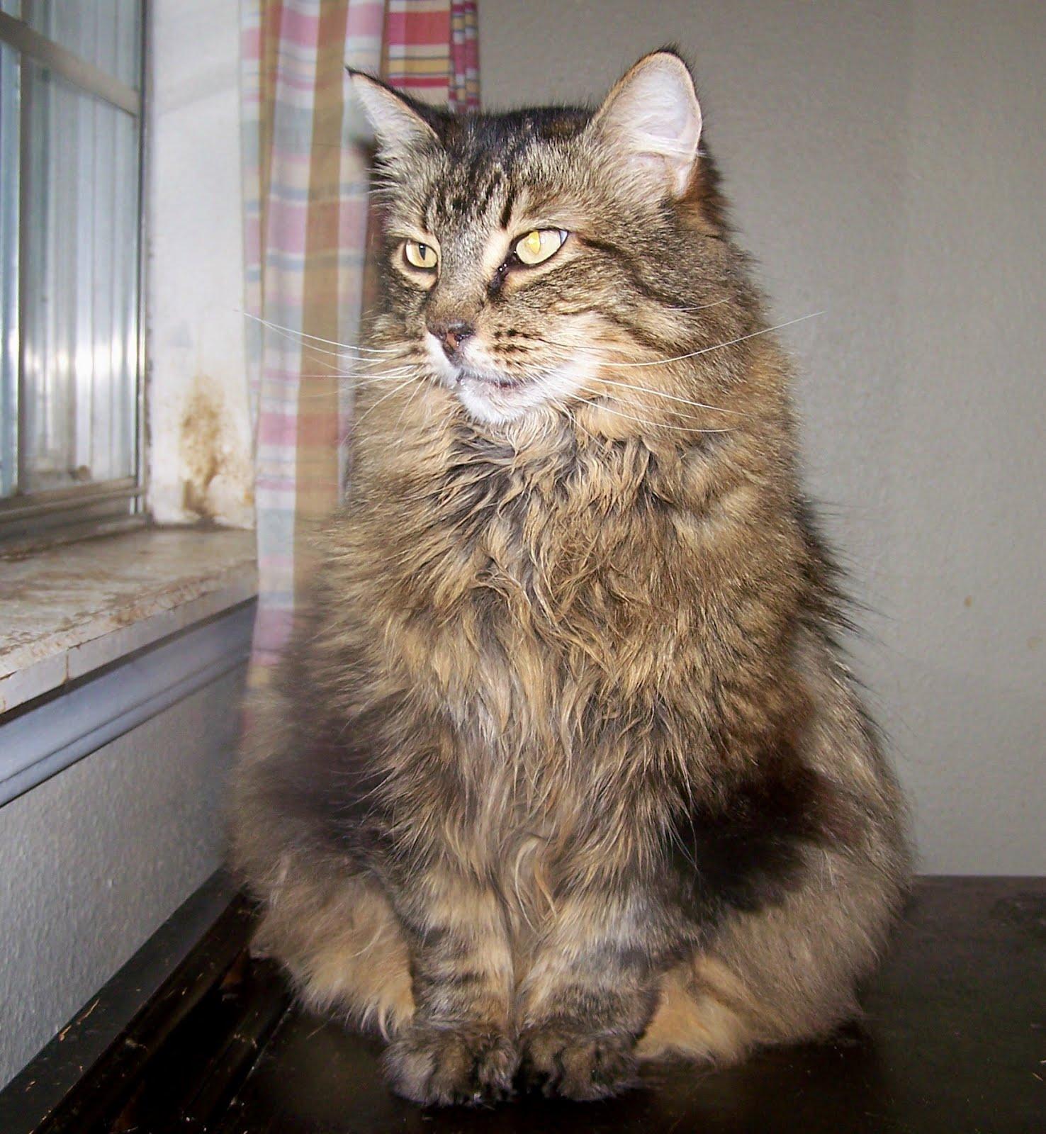 bad cat cougar 15