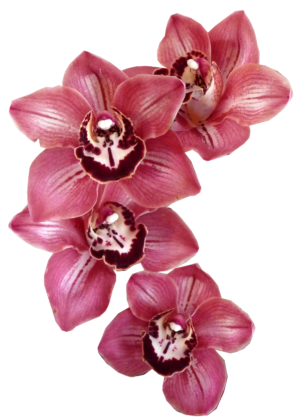 Aco transparence orchid e - Dessin d orchidee ...