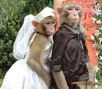Cinta Monyet Dan Kisahnya