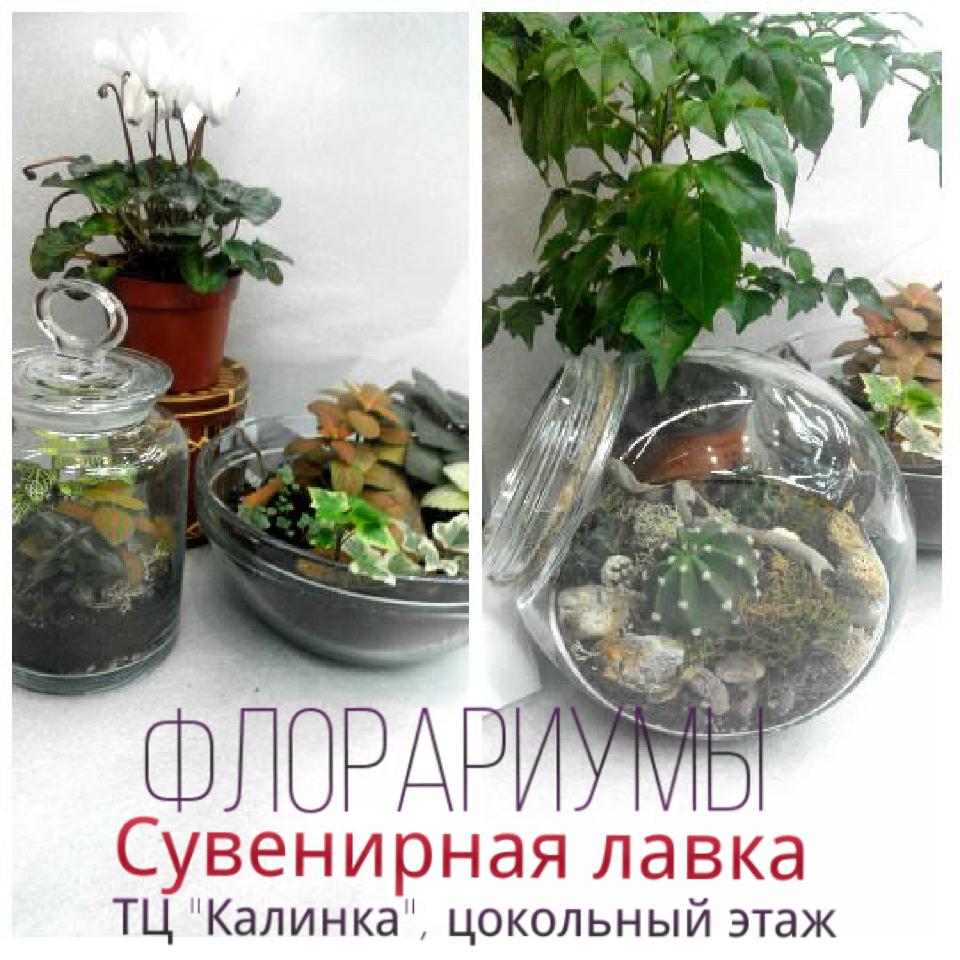 Флорариумы в Южно-Сахалинске