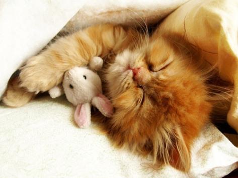 Gambar Kucing Tidur 1