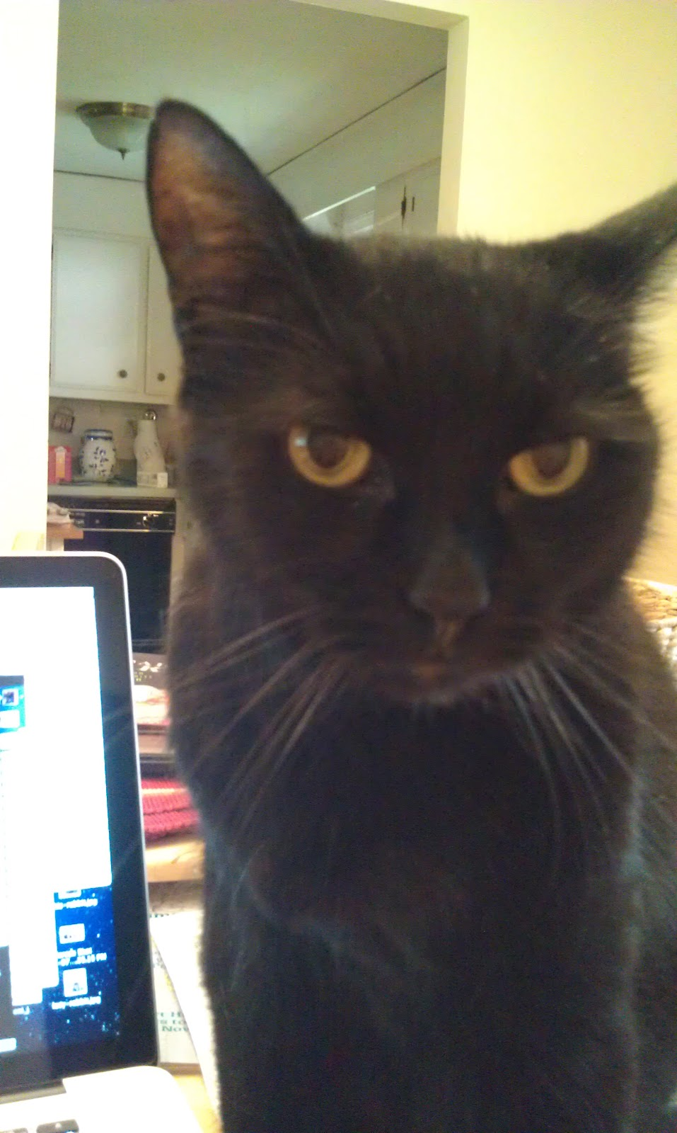 Cat Making Low Growling Noises