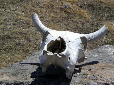 Gorson Top, Auli, Garhwal, Uttarakhand, weekend getaway, Himalayas, trek, alpine meadow, ibex
