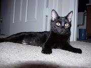 clawin' on my door. It's a mean black cat