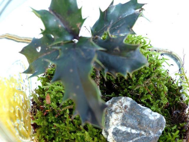 Wald Weckglas Küchentisch Stechpalme Moos Steine DIY Deko selbstgemacht einfach Zitrone