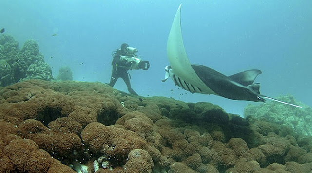 Scuba Diving in the Quirimbas Archipelago in Mozambique