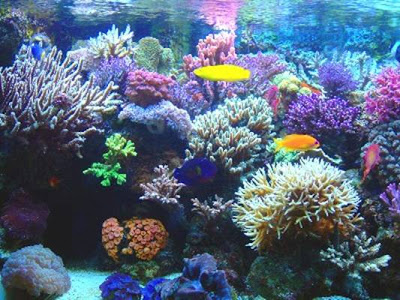Barrera de Coral, Australia