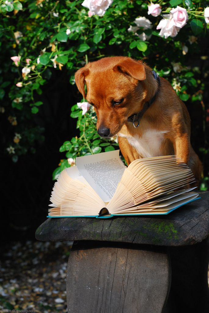 14. The Reading Dog by doggenhaus